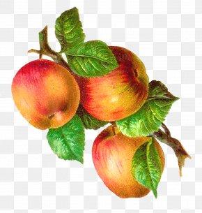 Pinterest Apple Cliparts - Macintosh Apple Retro Style Clip Art PNG