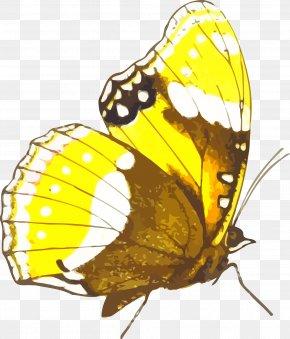 Monarch Butterfly - Monarch Butterfly Pieridae Clip Art PNG