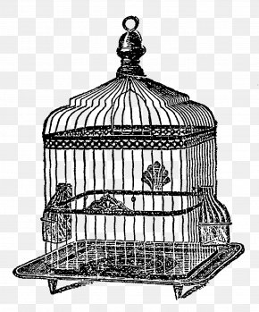 Birdcage - Black And White Drawing Monochrome Photography Line Art PNG
