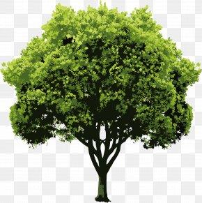 Vector Trees - Nature Drawing Clip Art PNG