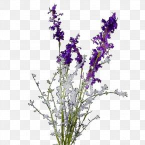 English Lavender Plant Stem Violet Cut Flowers Common Sage PNG