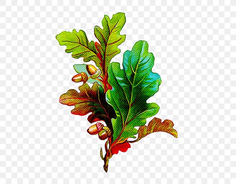 Leaf Plant Flower Tree Branch, PNG, 509x640px, Leaf, Branch, Flower, Oak, Plant Download Free