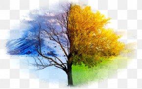 Winter - Desktop Wallpaper Winter High-definition Television Autumn Summer PNG