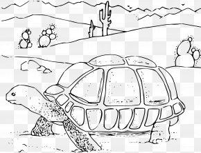 Coloring - Turtle Gopherus Desert Tortoise Coloring Book Clip Art PNG