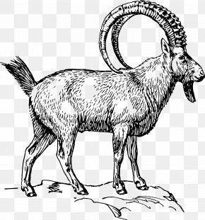 Goat - Alpine Ibex Goat Clip Art PNG