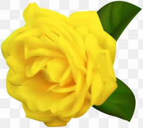 Yellow Rose Transparent Clipart Image - Yellow Garden Roses Clip Art PNG