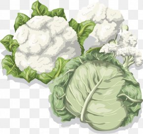 Cauliflower Vegetable Vector Material - Cabbage Cauliflower Vegetable Food PNG