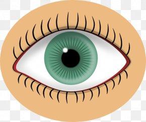 Eye Art Clip - Human Eye Iris Clip Art PNG