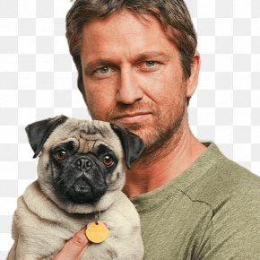 Actor - Gerard Butler Pug Celebrity Film Producer Actor PNG