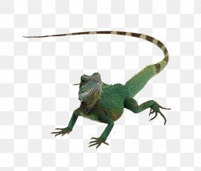 Lizard Animal - Lizard Reptile Chameleons Komodo Dragon PNG