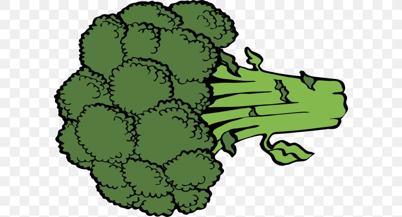 Broccoli Vegetable Cartoon Royalty-free Clip Art, PNG, 600x443px, Broccoli, Cartoon, Drawing, Flower, Flowering Plant Download Free