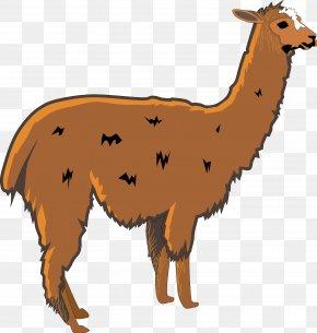 Llama Cliparts - Llama Alpaca Clip Art PNG