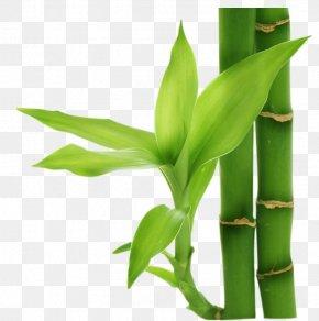 Bamboo - Bamboo Computer File PNG