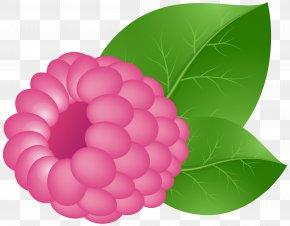Raspberry Transparent Clip Art Image - Raspberry Fruit Clip Art PNG