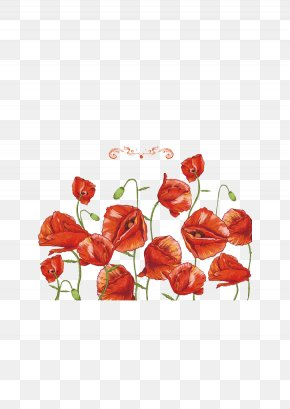 Red Bell Grass - Common Poppy Flower Remembrance Poppy PNG