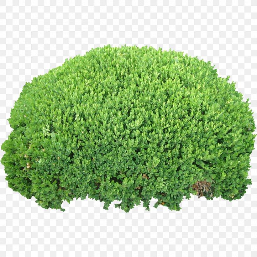Shrub Clip Art, PNG, 1462x1462px, Shrub, Evergreen, Garden, Grass, Groundcover Download Free