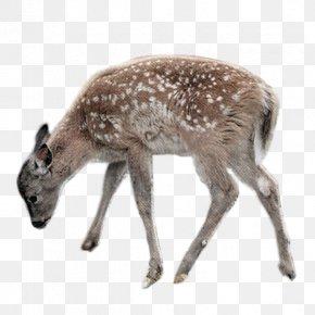 Deer - Deer Clip Art PNG
