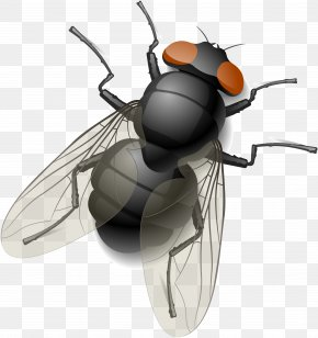 Fly - Royalty-free Fly Stock Photography Clip Art PNG