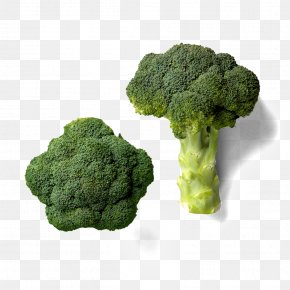 Green Broccoli - Broccoli Point Cook Nutrition Dietitian PNG