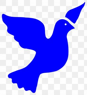 Free Dove Clipart - Columbidae Art Bird PNG