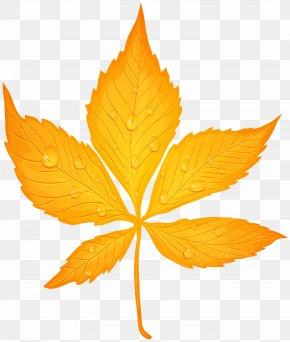 Yellow Autumn Leaf With Dew Drops Transparent Clip Art Image - Autumn Leaf Color Clip Art PNG