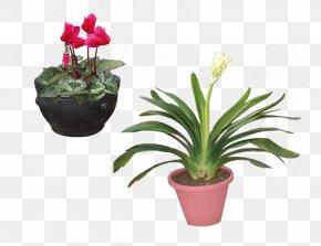 Potted L - Flowerpot Bonsai Garden Work Of Art PNG