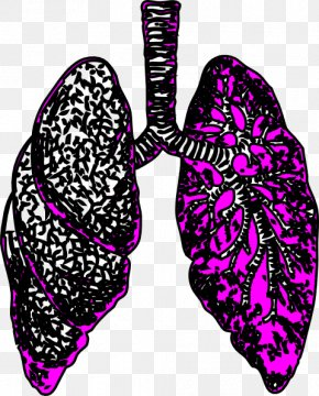 Small Lungs Cliparts - Lung Clip Art PNG