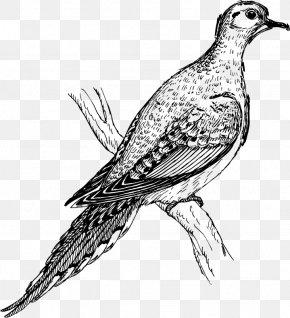 Columbidae Bird Rock Dove Drawing, PNG, 564x595px