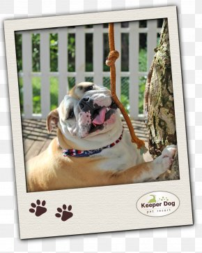 Pittsburg Pet Resort - Bulldog Pug Dog Breed Pet Non-sporting Group PNG