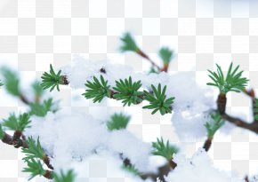 Snow Tree Branches - Winter Plant Tree Snow Frost PNG