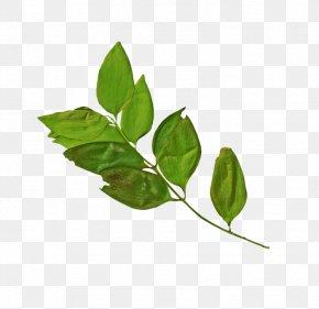 Leaf - Branch Leaf Logo Clip Art PNG