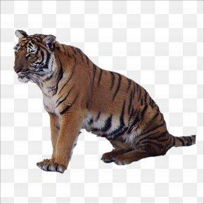 Tiger - Tiger Lion Leopard Felidae PNG