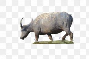 Buffalo Clipart - Water Buffalo PNG
