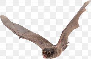 Bat - Vampire Bat Wing PNG