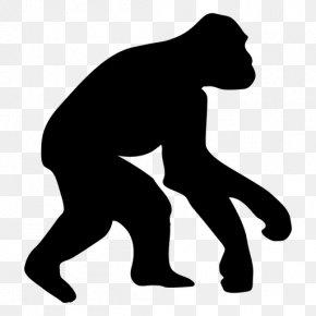Gorilla Vector - Ape Homo Sapiens Human Evolution Chimpanzee PNG