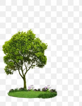 Tree - Choosing Small Trees Tree Planting Landscaping Root PNG