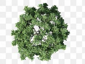 Plan - Tree Plan Shrub PNG