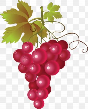 Grape Image - Red Wine Common Grape Vine Clip Art PNG