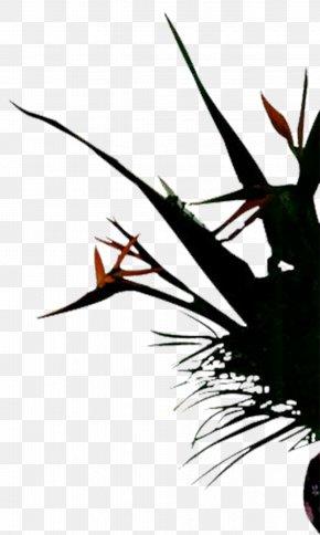Plant - Graphic Design Designer PNG