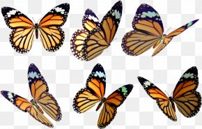 Monarch Butterfly Drawing Wings - Monarch Butterfly Insect Stock Photography Art PNG