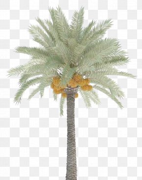 Date Palm Trees PNG