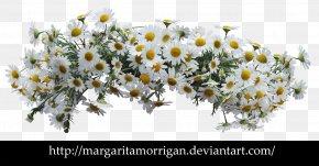 Flower Wreath - Flower Common Daisy Desktop Wallpaper Floral Design PNG