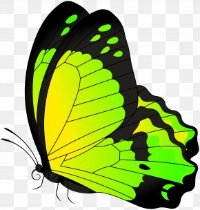 Butterfly Yellow Green Transparent Clip Art Image - Butterfly Clip Art PNG