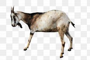 Goat - Goat Sheep Animal PNG