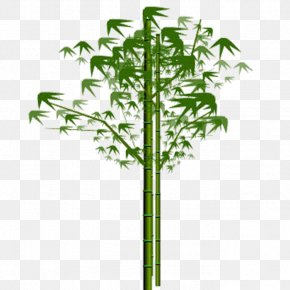 Bamboo - Bamboo Euclidean Vector Plant PNG