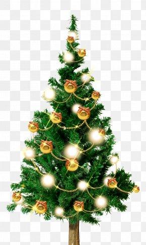 Christmas Tree - Christmas Tree Fir Santa Claus Christmas Day Christmas Ornament PNG