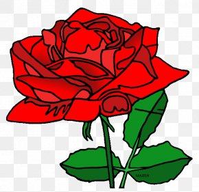 Flower - Garden Roses Washington, D.C. Rosa 'American Beauty' Floral Design Clip Art PNG
