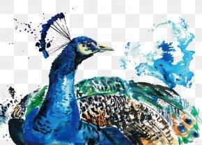 Vector Watercolor Peacock - Watercolor Painting Peafowl PNG