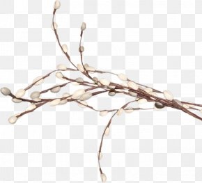 Willow Tree - Digital Image Weeping Willow Tree Clip Art PNG