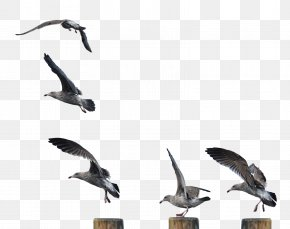 Gull - Hummingbird DeviantArt Stock Photography PNG